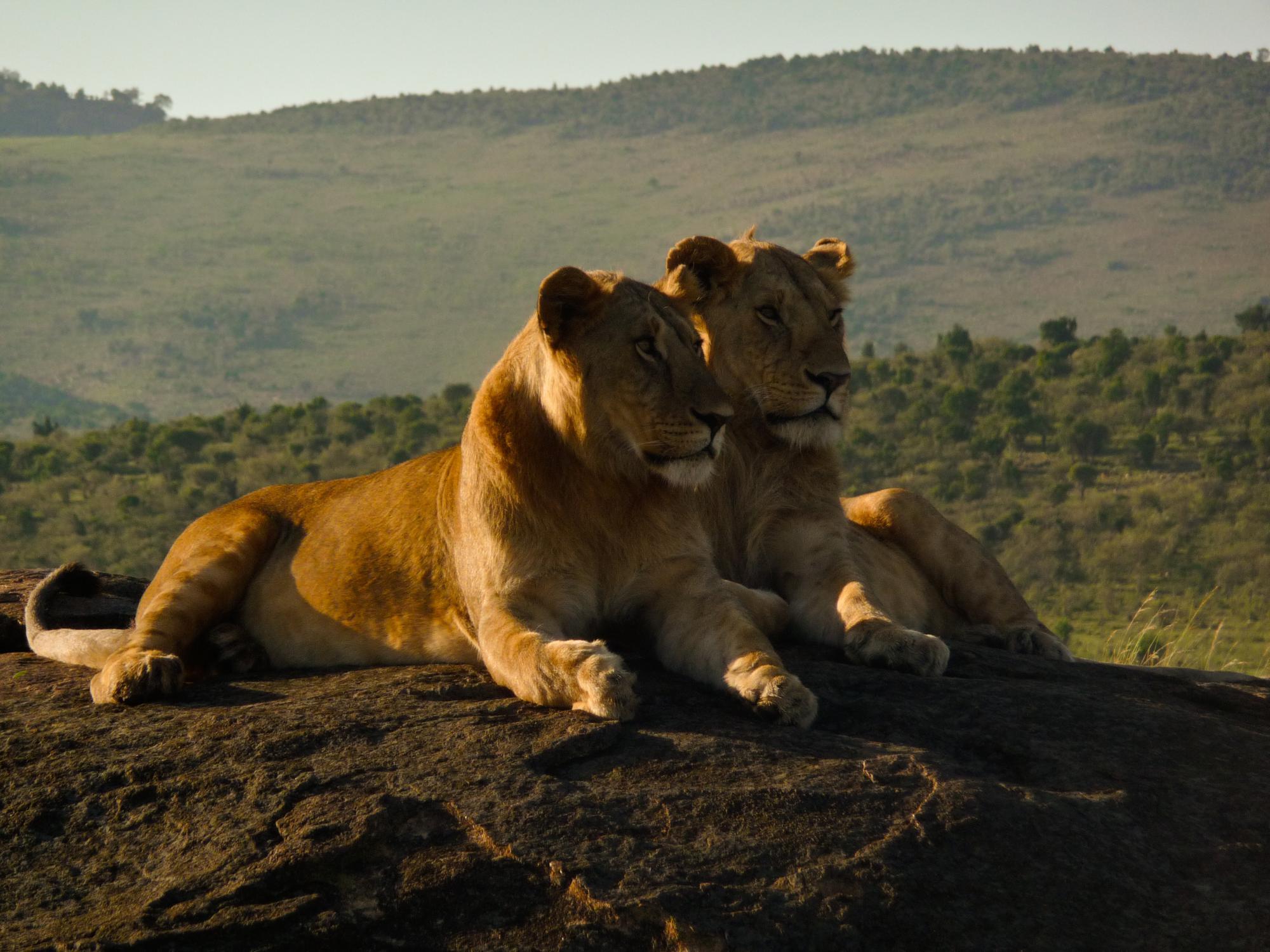 paket safari afrika