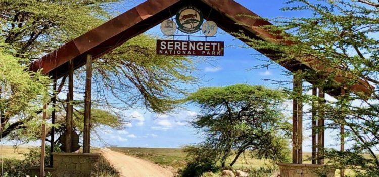 Safari di Tanzania